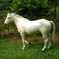 Horse<br/>h 1800 x 2000 x 530 mm / fiber reinforced plastics, steel / 2013